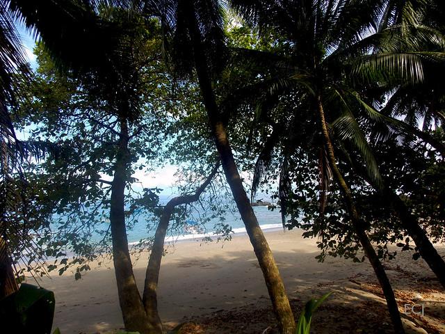 En medio de la sombra de las palmeras/ In the shadow of the palmtrees