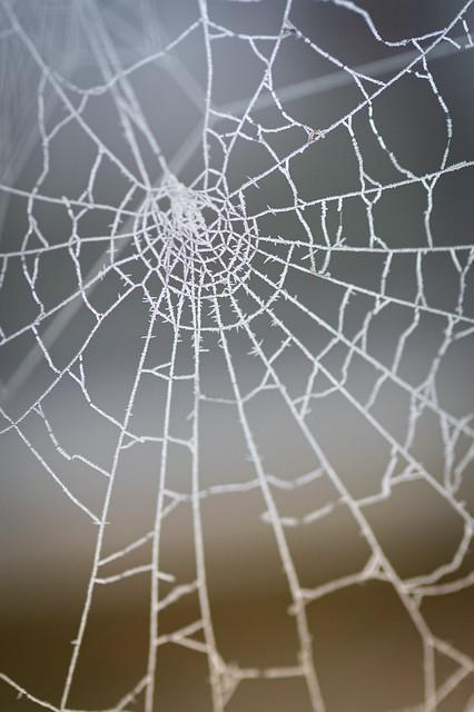 The frozen spider web