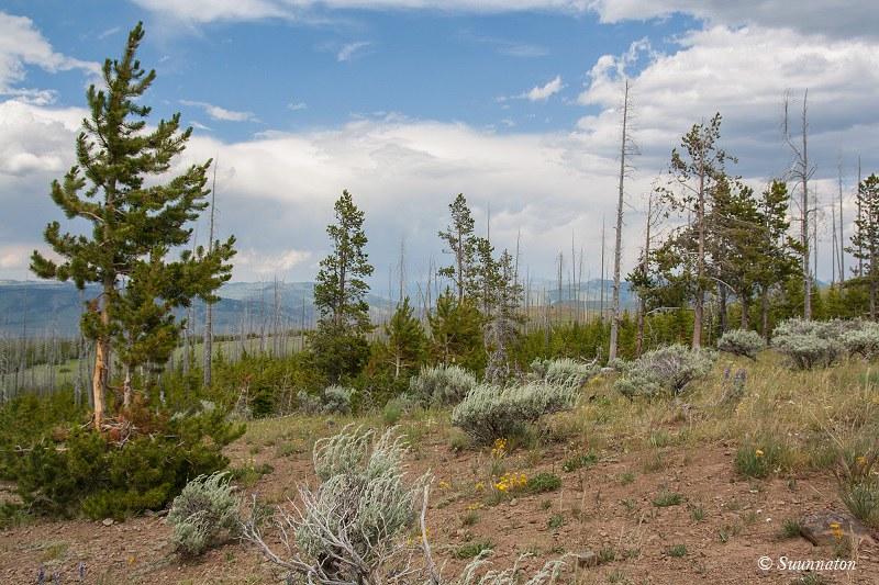 Yellowstone, maisema