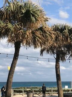 Palm Winds