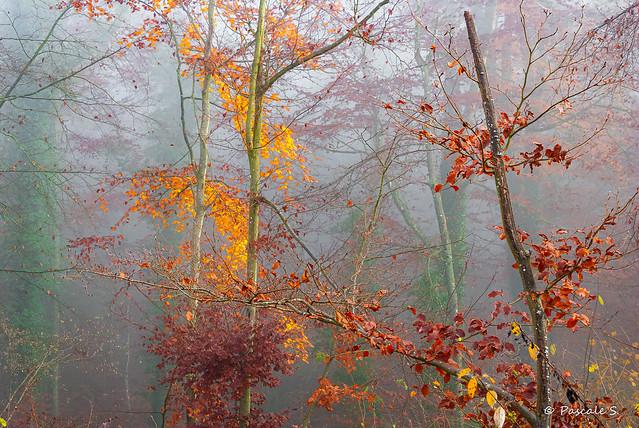 Restes d'automne