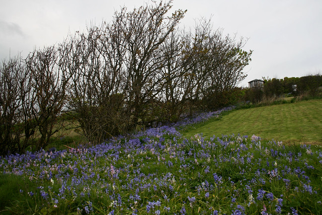 The Fife Coast Path in Crail