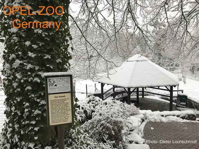 Winter Time - Opelzoo in Kronberg, Taunus, Germany - 2017 -