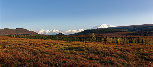 Take a Step Into Alaska's Backyard (Denali National Park & Preserve)