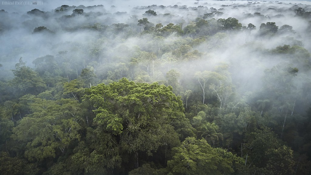 Morning mists in the Peruvian Amazon