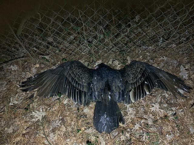 Vulture Down