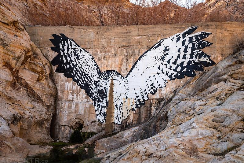 Dam Owl