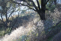 Malibu Creek hiking