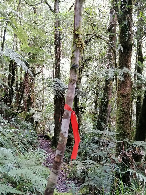 Kapatagan Digos Mount Apo (4)