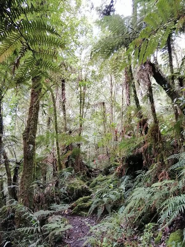 Kapatagan Digos Mount Apo (3)