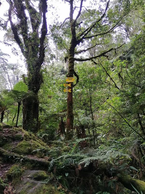 Kapatagan Digos Mount Apo (2)