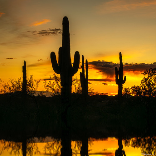 arizona cacti cactus desert estrellla goodyeararizona kenmickelphotography landscape outdoors plants reflections saguaro sky sunsets backlighting nature photography silhouette silhouettes sunset goodyear unitedstatesofamerica
