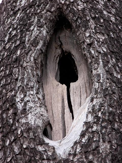 Awbury Arboretum Tree
