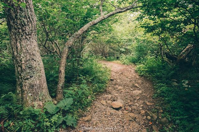 Appalachian Trail - Hawksbill Mountain