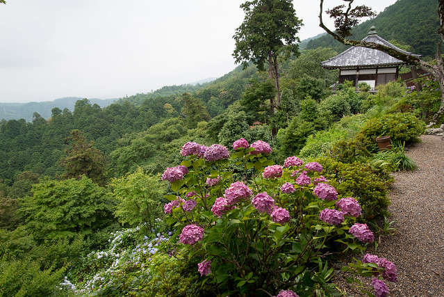 Yoshimine-dera 善峯寺