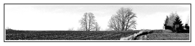 Pola i drzewa.