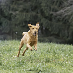 Lucy is running