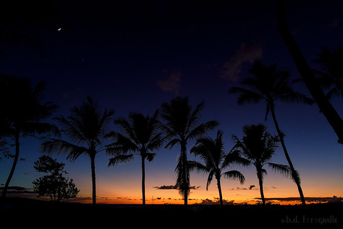 hawaii sunsetssunrises sunsetssunrisesaroundtheworld121countries sunset sonnenuntergang palms palmen amerika usa canoneosr canonrf24105 maui kihei