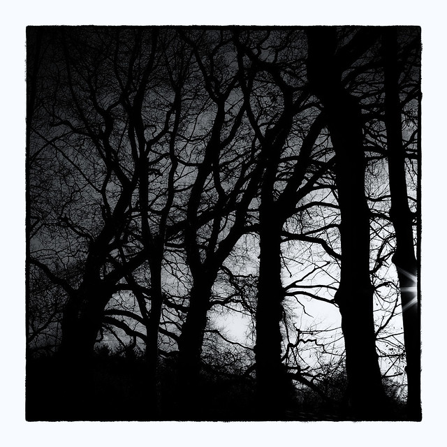 at the edge of fangorn