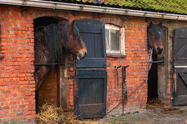 Old stable doors (DDD/TDD)