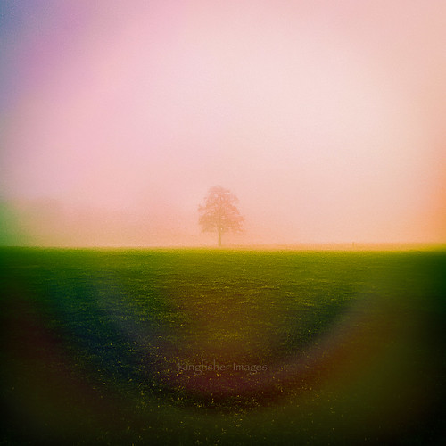 grass sunset sun ede mood mist tree iphoneography iphone kingfisherimages