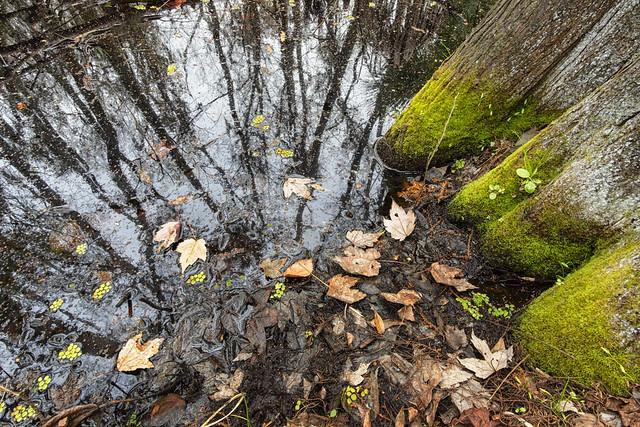 Reflection at the Swamp. (Reflejos en el pantano).