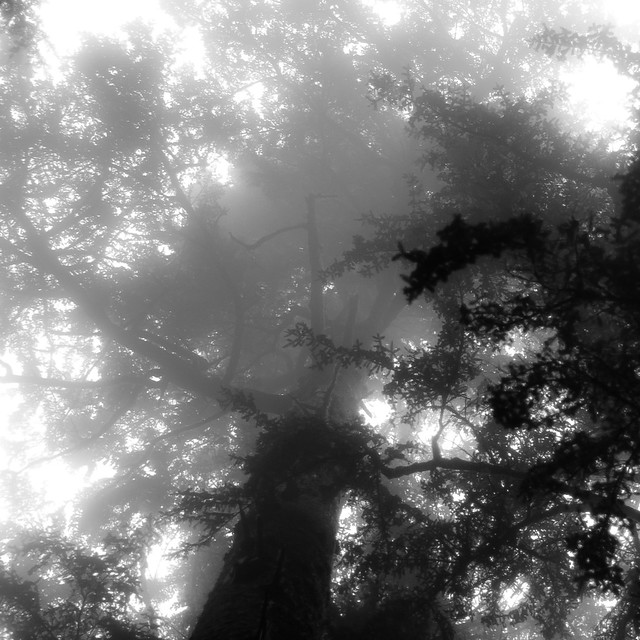 Forest In Fog 019