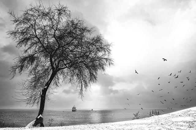 Sea & Snow