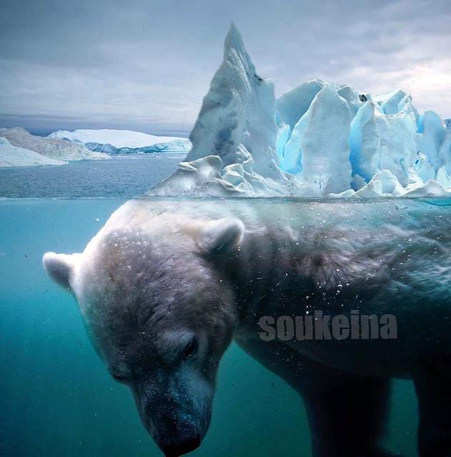 nounours ice