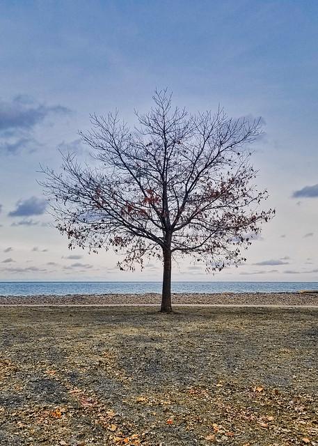 Tree-nacious