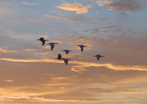 birds sunrise titusville clouds maxbrewermemorialparkway rawtherapee canonef85mmf18usm