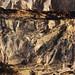 sehr sportlich - Flussuferläufer (Actitis hypoleucos)
