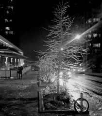 iced tree @ night