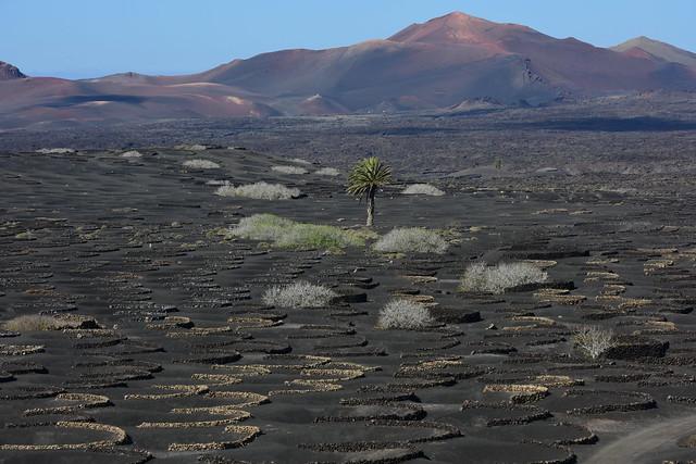 La Geria, Lanzarote, Islas_Canarias, Spain, Nikon_D810, January_2020_701