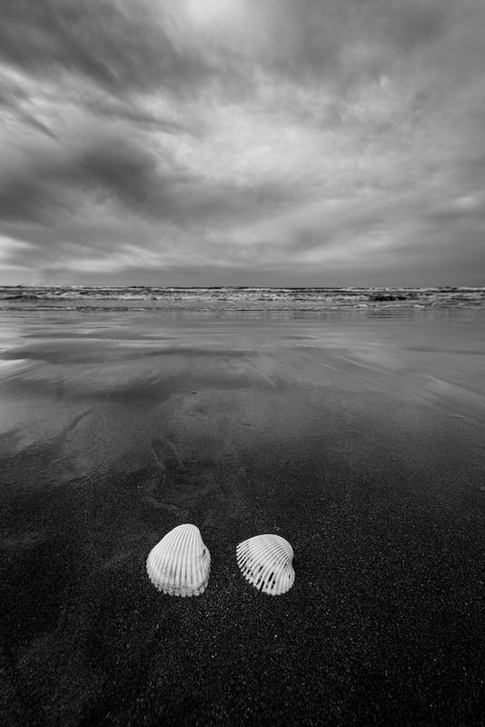 Two seashells on the beach