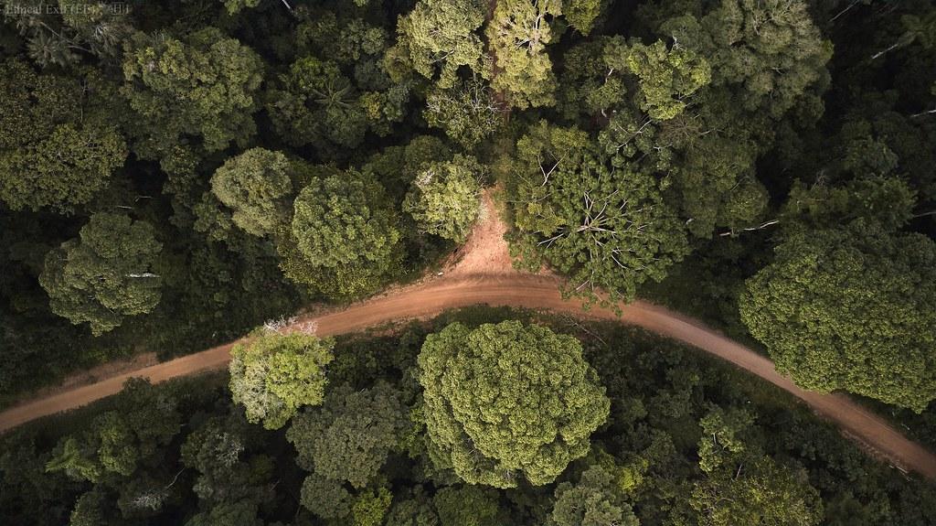 Amazon roads