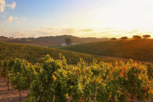 Portugal. From Europe's Top Wine Tasting Landscapes for 2020