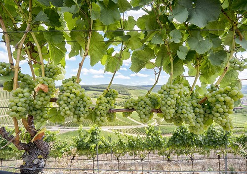 France. From Europe's Top Wine Tasting Landscapes for 2020