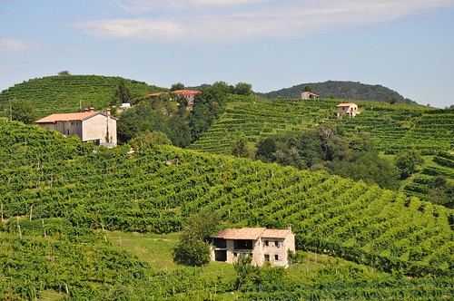 Italy. From Europe's Top Wine Tasting Landscapes for 2020