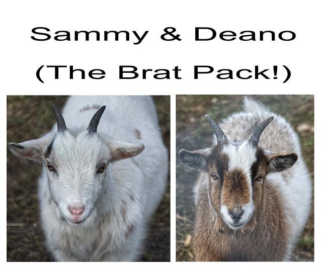 The Brat Pack!