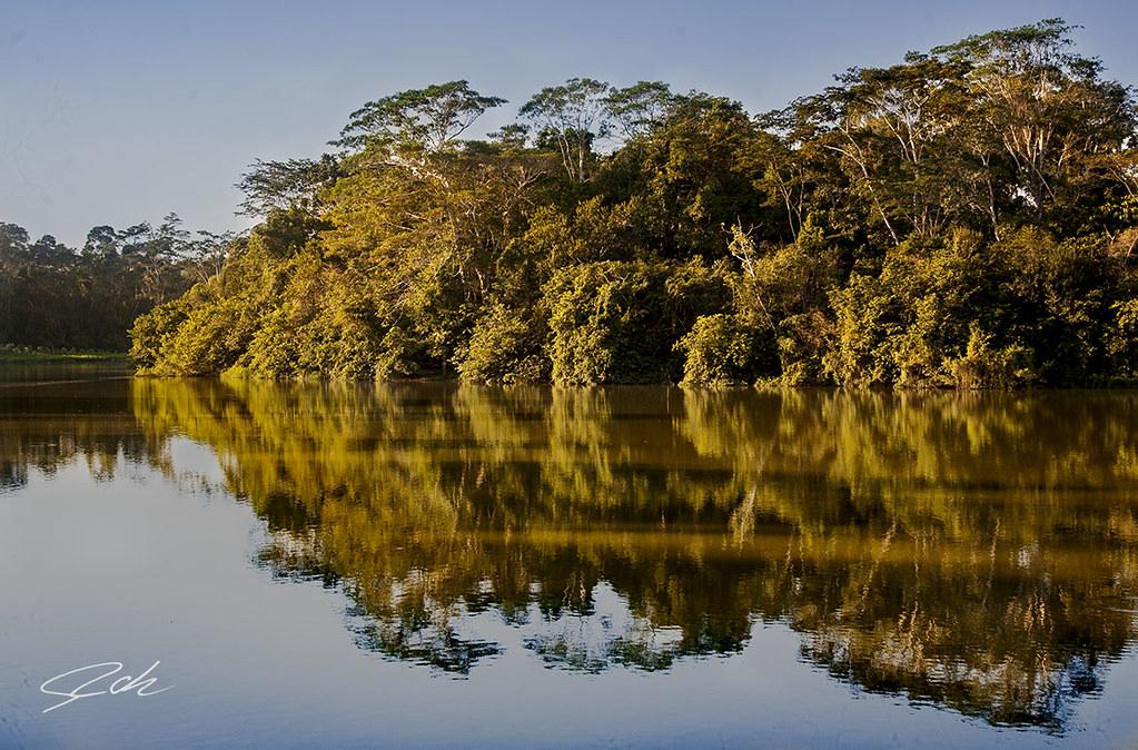 Manu national park, PERU.