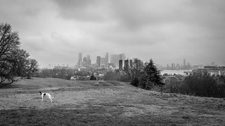 A grey day. Greenwich Park.