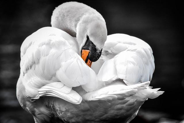 birds1 (55)-1-3