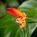 Hawaii_Botanical-1078.jpg