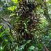 Hawaii_Botanical-1016.jpg