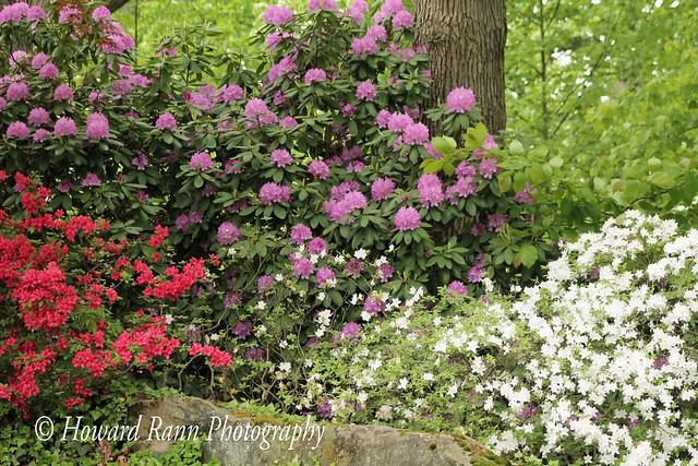 Stan Hywet Estate & Gardens (162)