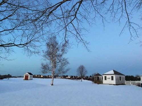 sunsetlight snow baretrees winter
