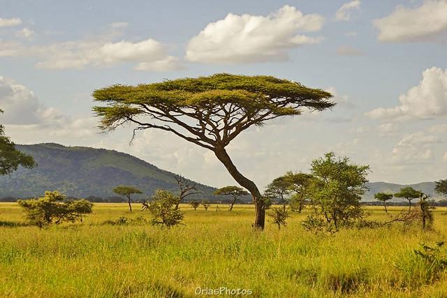 Seregenti, Tanzania