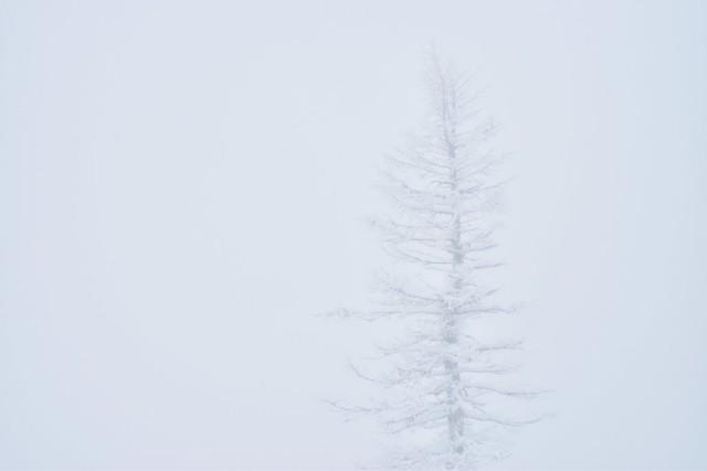 A Winter Death
