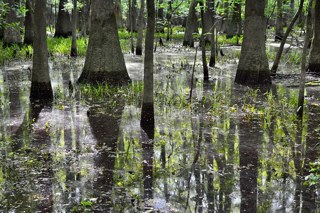 Trees and Reflections in the Waters of Congaree National Park